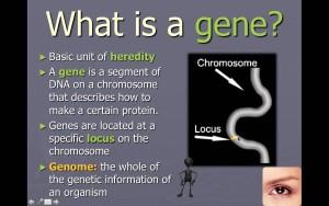 Where are Genes