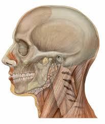 skullscience